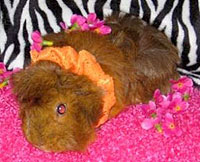 Guinea pig squeaks alert and saves lives