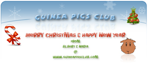 Merry Christmas & Happy New Year from Guinea Pigs Club