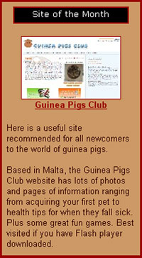 Guinea Pigs Club awarded site of the month from 'Comfy Cavies'